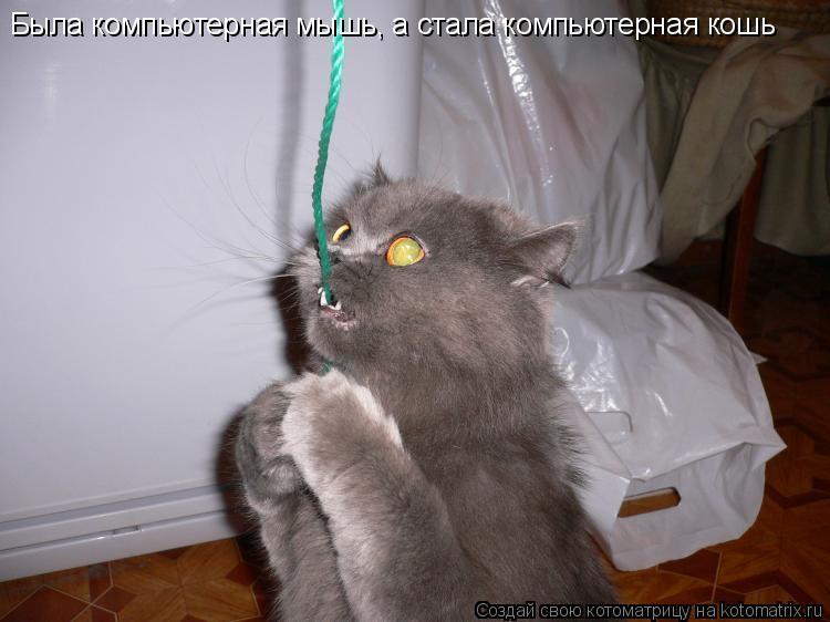 Котоматрица: Была компьютерная мышь, а стала компьютерная кошь