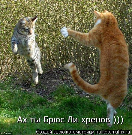Котоматрица: Ах ты Брюс Ли хренов )))