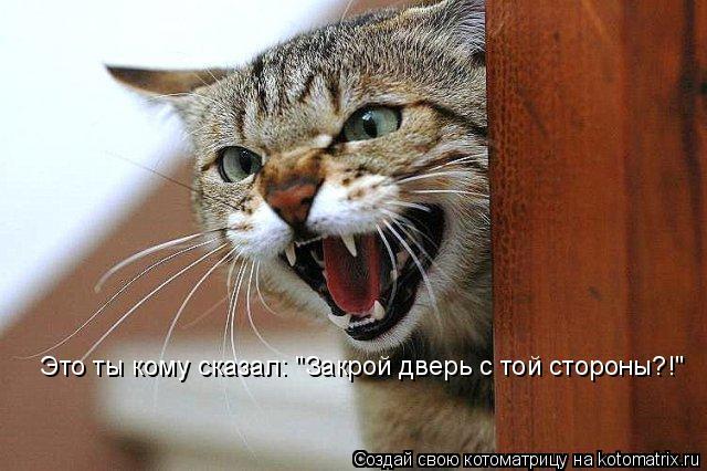 """Котоматрица: Это ты кому сказал: """"Закрой дверь с той стороны?!"""""""