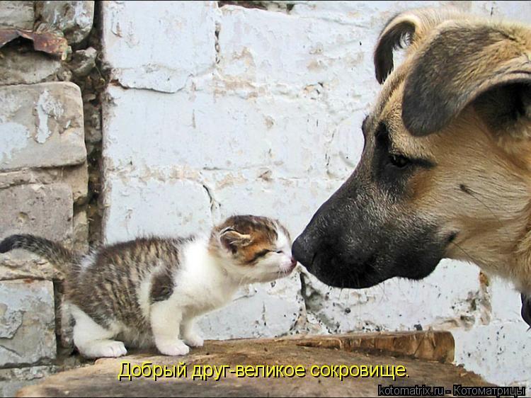 Котоматрица: Добрый друг-великое сокровище.