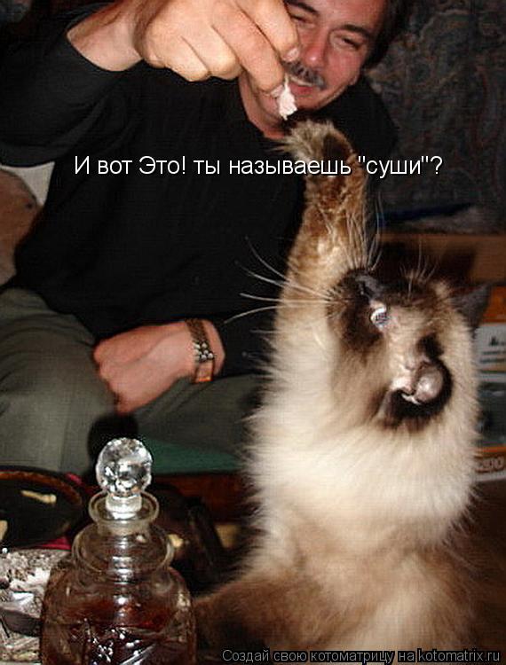 """Котоматрица: И вот Это! ты называешь """"суши""""?"""