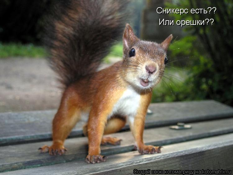 Котоматрица: Сникерс есть?? Или орешки??