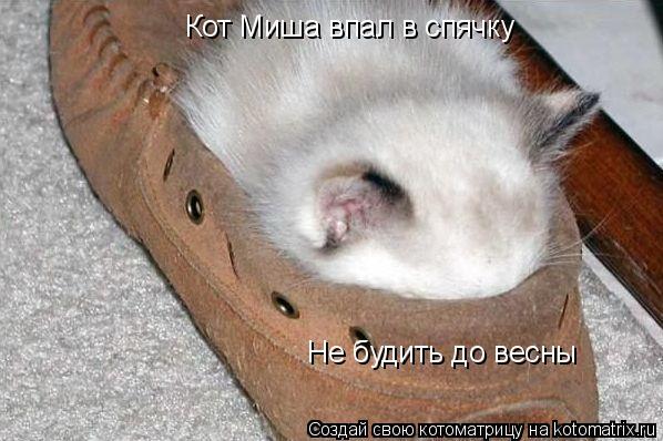 Котоматрица: Кот Миша впал в спячку Не будить до весны