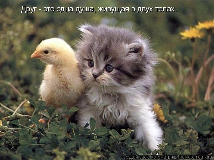 Котоматрица: Друг - это одна душа, живущая в двух телах.