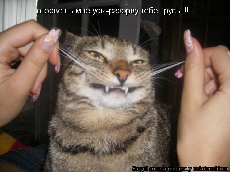 Котоматрица: оторвешь мне усы-разорву тебе трусы !!!