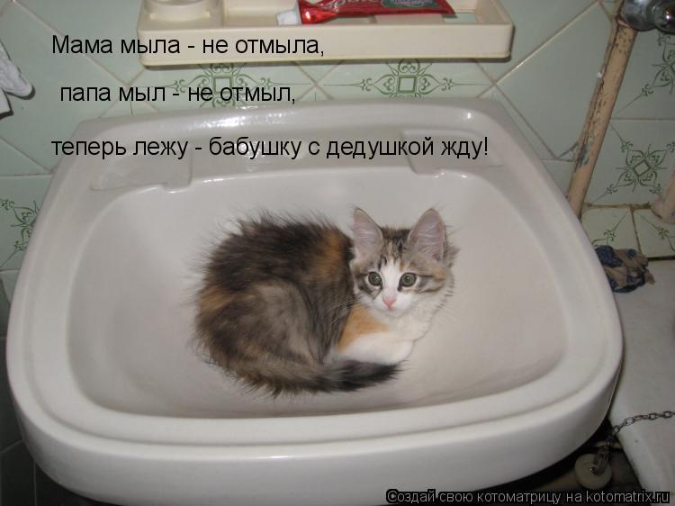 Котоматрица: Мама мыла - не отмыла, папа мыл - не отмыл, теперь лежу - бабушку с дедушкой жду!