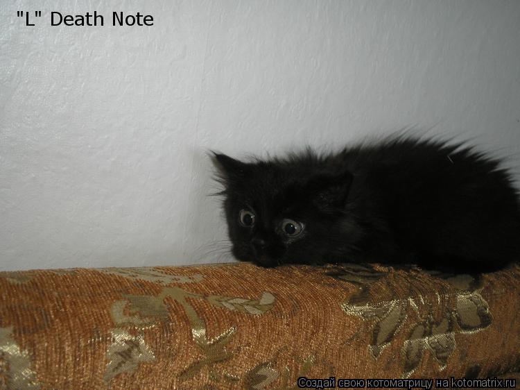 "Котоматрица: ""L"" Death Note"