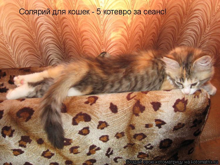 Котоматрица: Солярий для кошек - 5 котевро за сеанс!