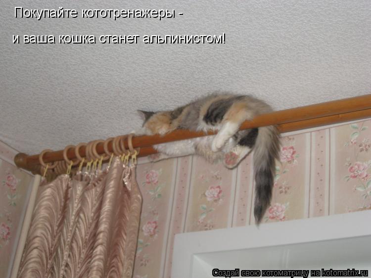 Котоматрица: Покупайте кототренажеры -  и ваша кошка станет альпинистом!