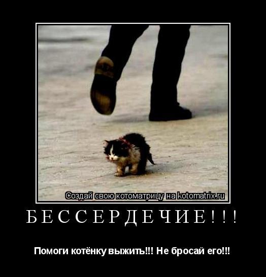 Котоматрица: БЕССЕРДЕЧИЕ!!! Помоги котёнку выжить!!! Не бросай его!!!