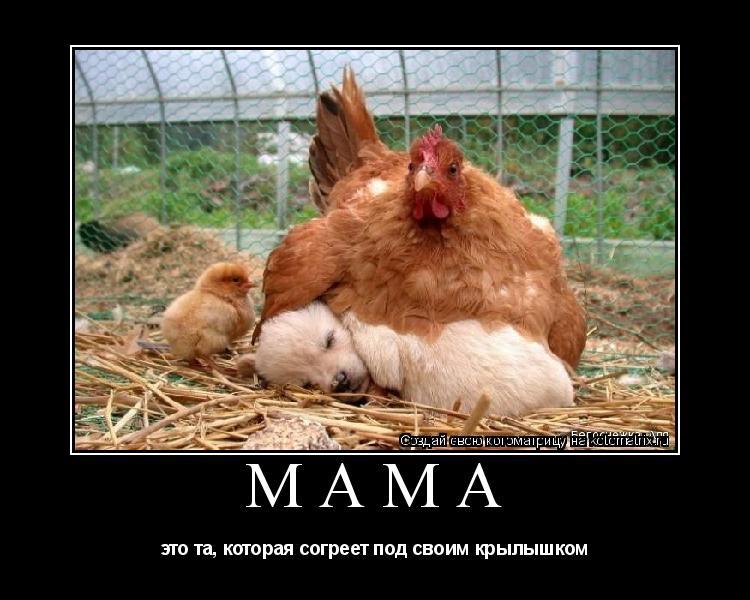 Котоматрица: Мама это та, которая согреет под своим крылышком