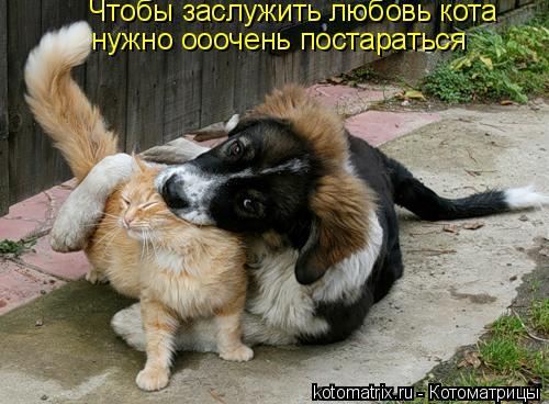 Котоматрица: Чтобы заслужить любовь кота  нужно ооочень постараться