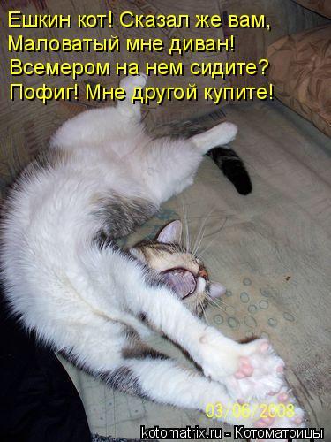 Котоматрица: Ешкин кот! Сказал же вам,  Маловатый мне диван! Всемером на нем сидите? Пофиг! Мне другой купите!