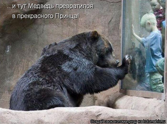Котоматрица: ...и тут Медведь превратился  в прекрасного Принца!