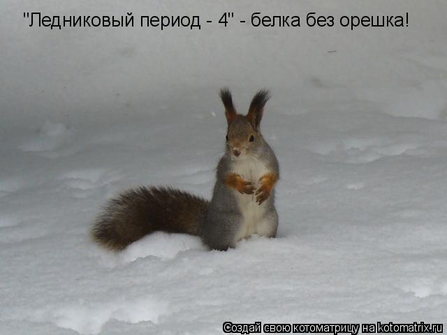 """Котоматрица: """"Ледниковый период - 4"""" - белка без орешка!"""
