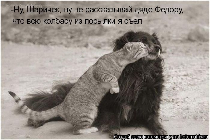 Котоматрица: -Ну, Шаричек, ну не рассказывай дяде Федору, что всю колбасу из посылки я съел