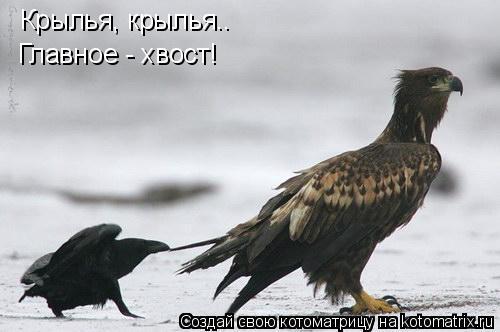 Котоматрица: Крылья, крылья.. Главное - хвост!