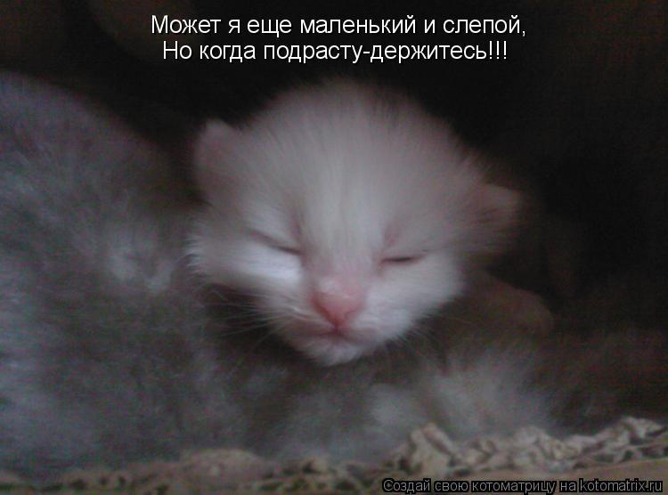 Котоматрица: Может я еще маленький и слепой, Но когда подрасту-держитесь!!!