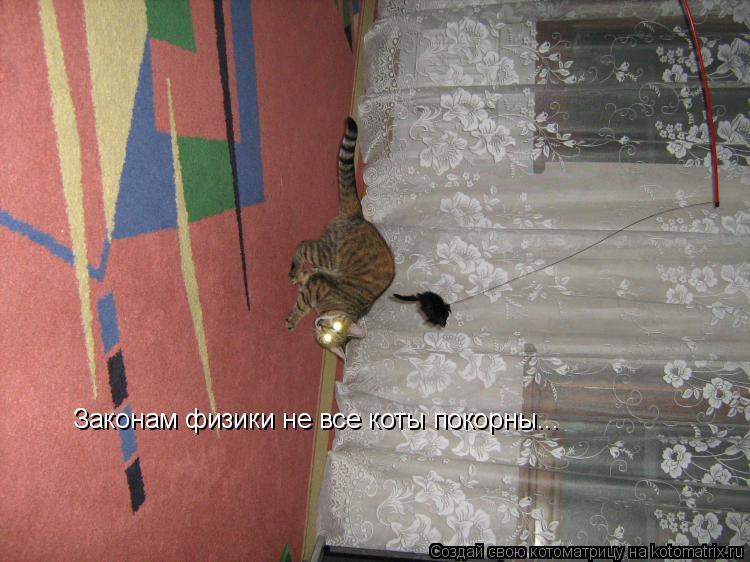 Котоматрица: Законам физики не все коты покорны...