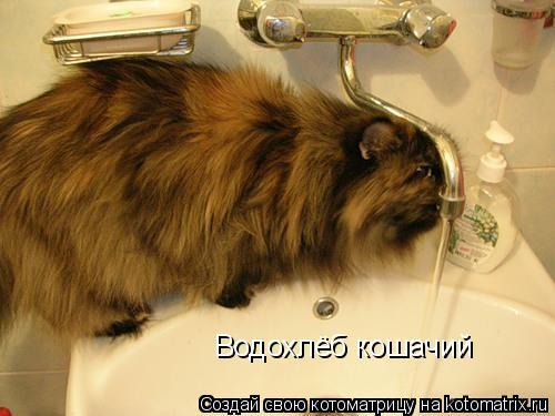 Котоматрица: Водохлёб кошачий
