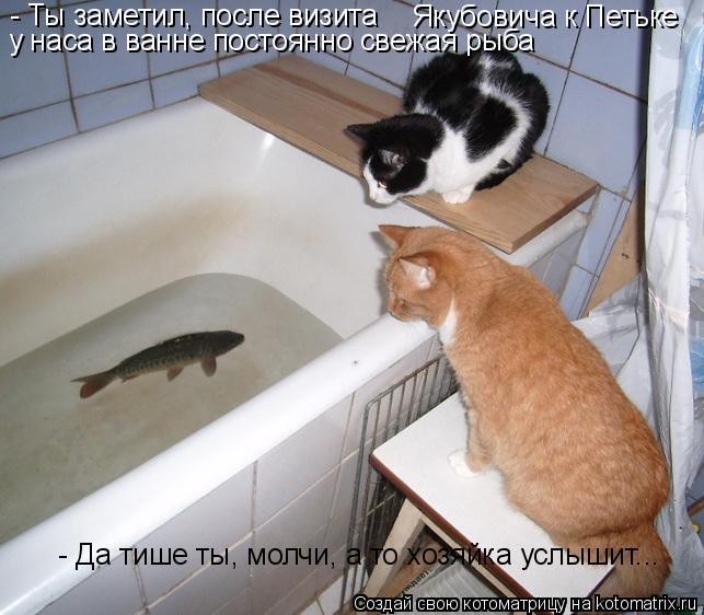 Котоматрица: - Ты заметил, после визита   Якубовича к Петьке у наса в ванне постоянно свежая рыба - Да тише ты, молчи, а то хозяйка услышит...