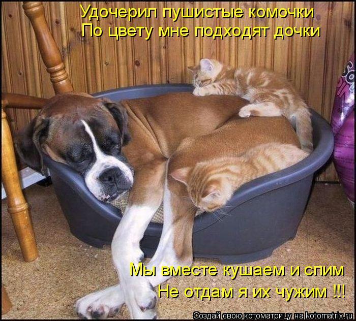 Котоматрица: Удочерил пушистые комочки По цвету мне подходят дочки Мы вместе кушаем и спим Не отдам я их чужим !!!