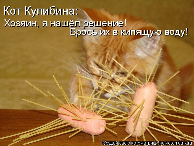 Котоматрица: Кот Кулибина: Хозяин, я нашёл решение! Брось их в кипящую воду!