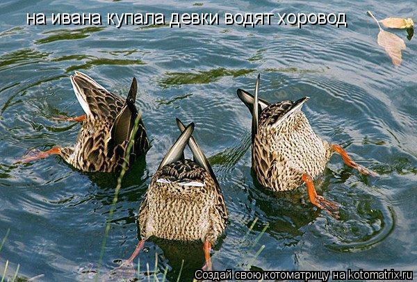 Котоматрица: на ивана купала девки водят хоровод