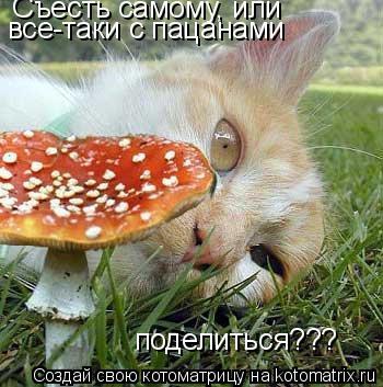 Котоматрица: Съесть самому, или  все-таки с пацанами поделиться???