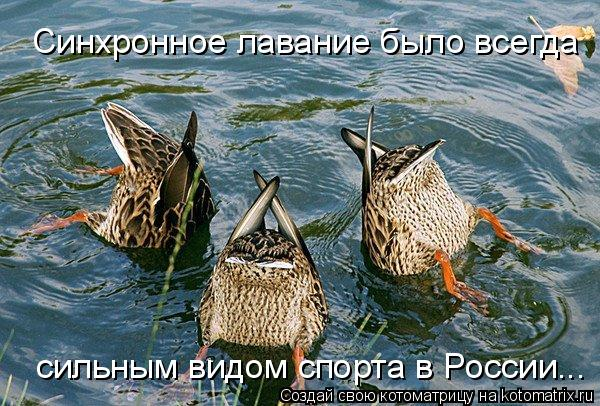 Котоматрица: Синхронное лавание было всегда  сильным видом спорта в России...