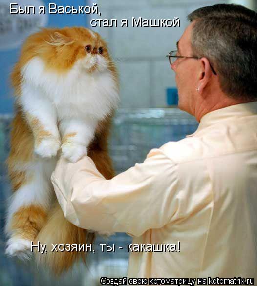 Котоматрица: Был я Васькой, стал я Машкой Ну, хозяин, ты - какашка!