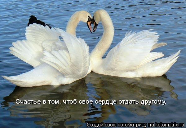 Котоматрица: Счастье в том, чтоб свое сердце отдать другому.