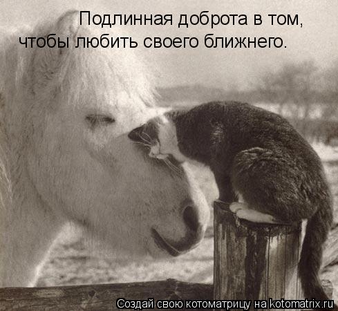 Котоматрица: Подлинная доброта в том, чтобы любить своего ближнего.