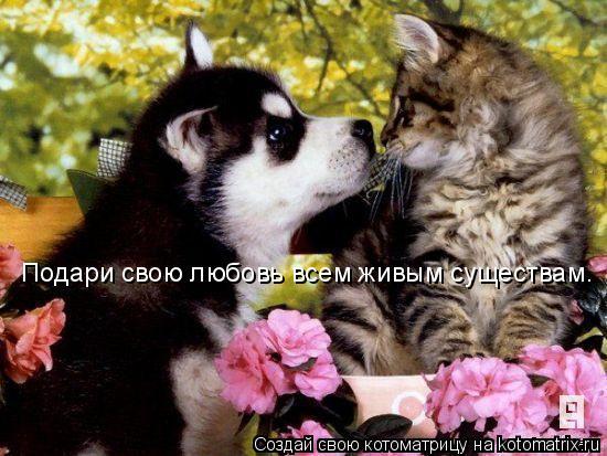Котоматрица: Подари свою любовь всем живым существам.
