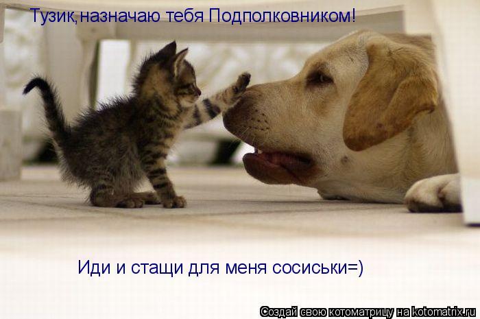 Котоматрица: Тузик,назначаю тебя Подполковником! Иди и стащи для меня сосиськи=)