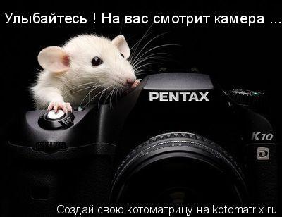 Котоматрица: Улыбайтесь ! На вас смотрит камера ...