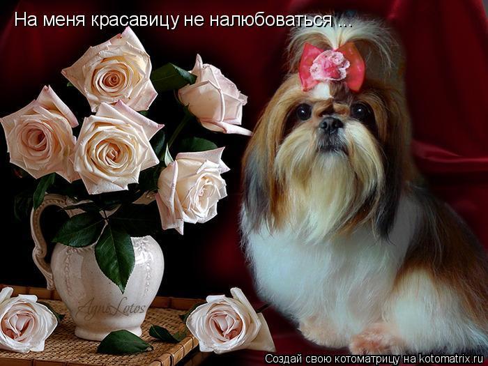 Котоматрица: На меня красавицу не налюбоваться ...