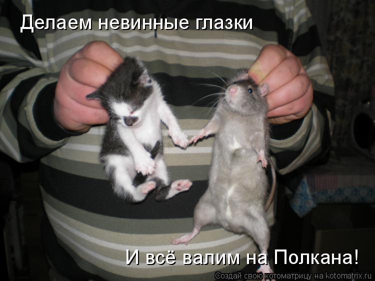 Котоматрица: Делаем невинные глазки И всё валим на Полкана!