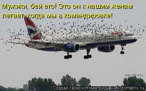 Котоматрица: Мужики, бей его! Это он к нашим женам  летает, когда мы в командировке!