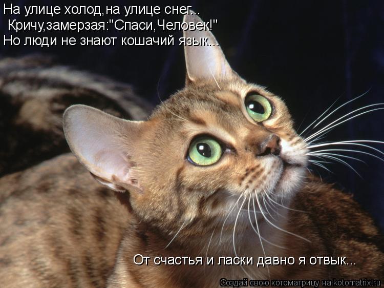 """Котоматрица: На улице холод,на улице снег... Кричу,замерзая:""""Спаси,Человек!"""" Но люди не знают кошачий язык... От счастья и ласки давно я отвык..."""