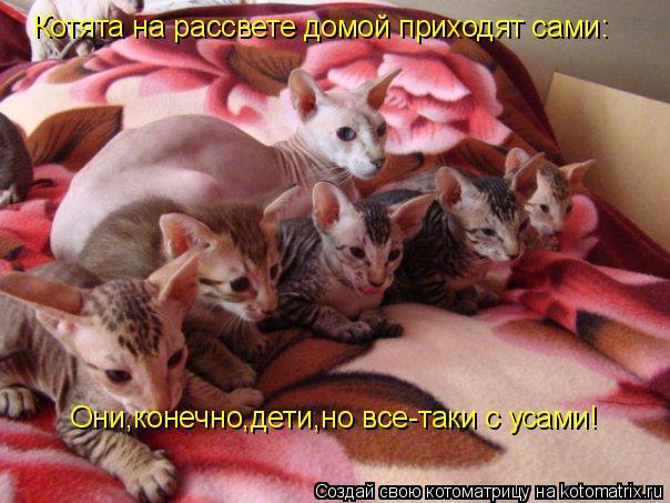 Котоматрица: Котята на рассвете домой приходят сами: Они,конечно,дети,но все-таки с усами!
