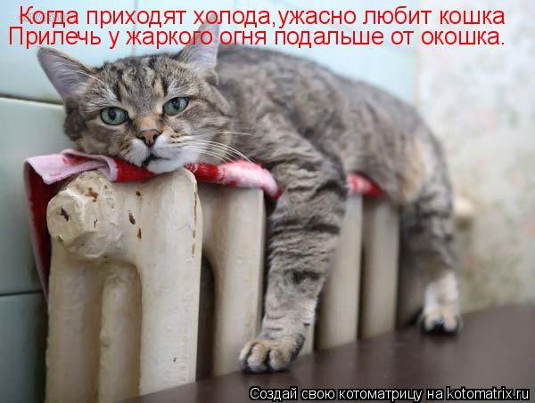 Котоматрица: Когда приходят холода,ужасно любит кошка Прилечь у жаркого огня подальше от окошка.
