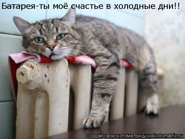 Котоматрица: Батарея-ты моё счастье в холодные дни!!