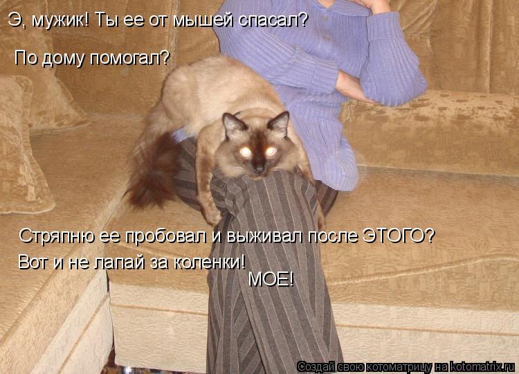 Котоматрица: По дому помогал? Стряпню ее пробовал и выживал после ЭТОГО? Вот и не лапай за коленки! МОЕ! Э, мужик! Ты ее от мышей спасал?