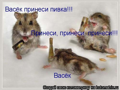 Котоматрица: Васёк Васёк принеси пивка!!! Принеси, принеси, принеси!!!