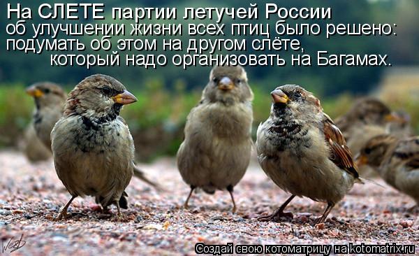 Котоматрица: об улучшении жизни всех птиц было решено: подумать об этом на другом слёте, который надо организовать на Багамах. На СЛЕТЕ партии летучей Ро