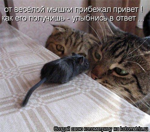 Котоматрица: от весёлой мышки прибежал привет ! как его получишь - улыбнись в ответ ...