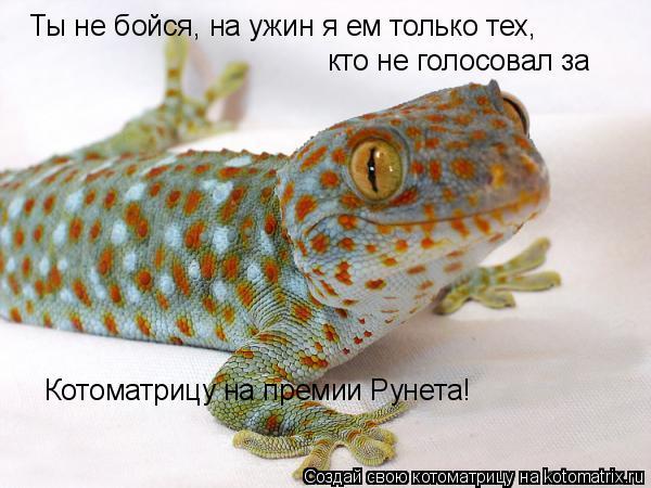 Котоматрица: Ты не бойся, на ужин я ем только тех, кто не голосовал за  Котоматрицу на премии Рунета!