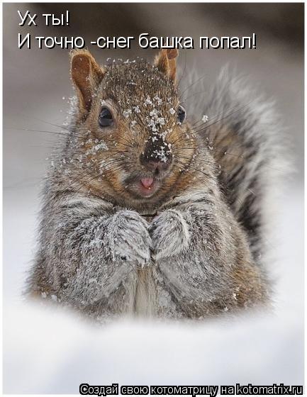 Котоматрица: Ух ты! И точно -снег башка попал!