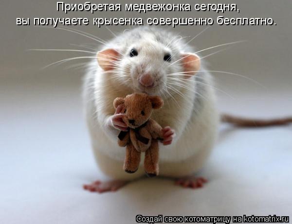 Котоматрица: Приобретая медвежонка сегодня,  вы получаете крысенка совершенно бесплатно.